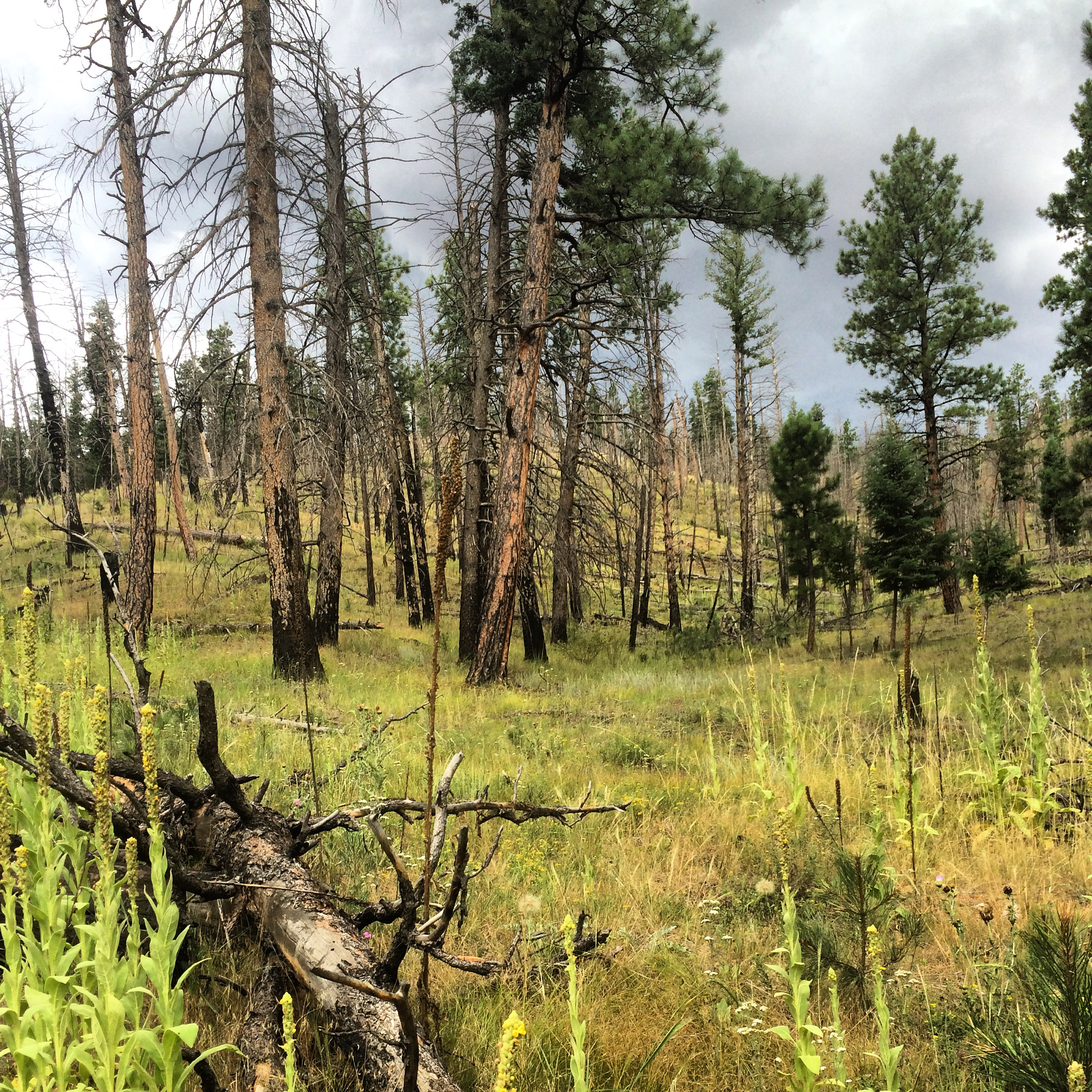 A recovering burnt forest