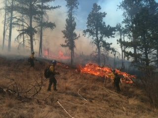 Firefighters in burning forest
